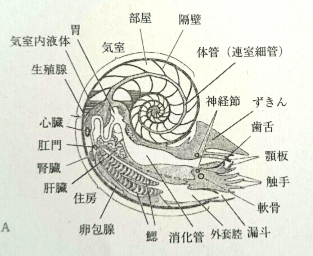 オウムガイ構造