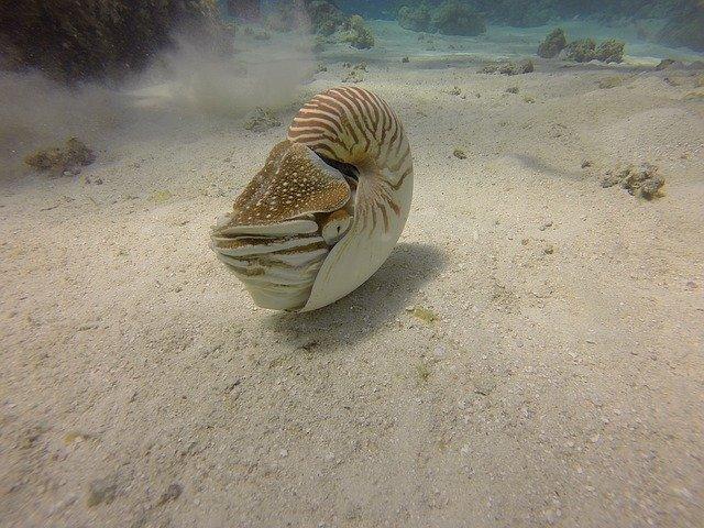 nautilus オウムガイ